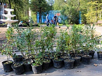 Almost 5000 trees were planted on this day in Zhukovsky